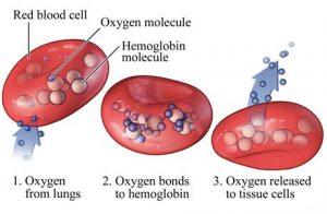 اکسیژن در خون